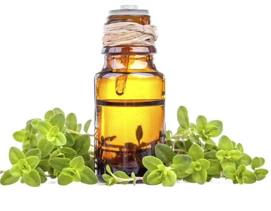 El aceite esencial de Mejorana