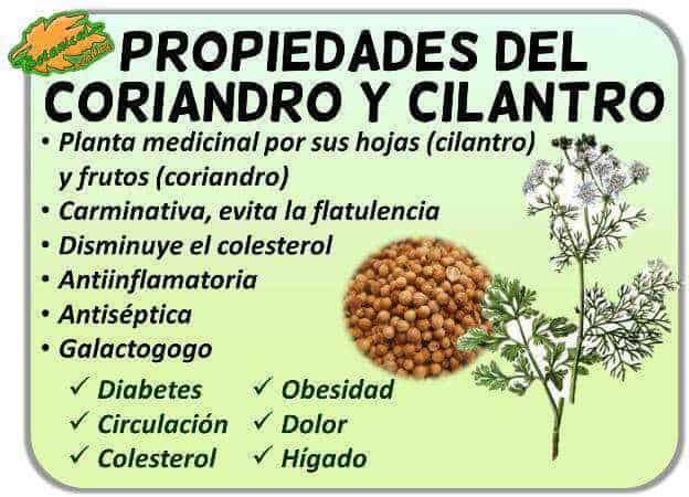 Aceite esencial de Coriandro