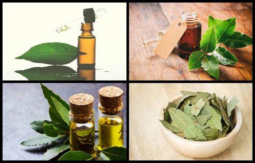Laurel aceites esenciales