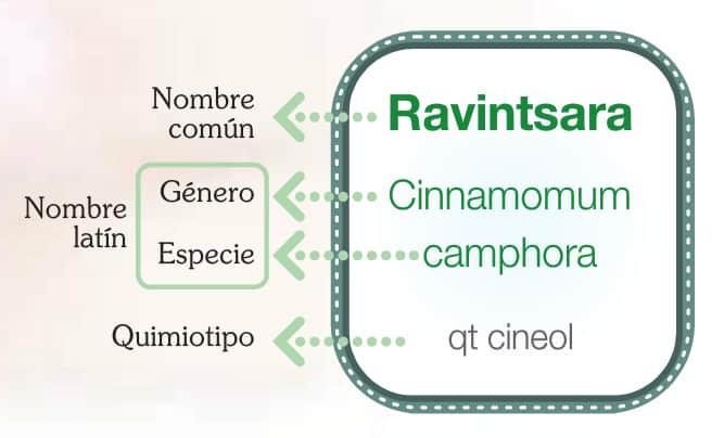 Quimiotipo del Ravintsara